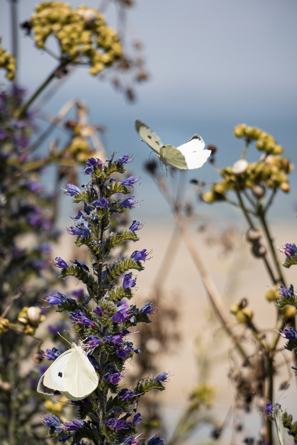 white butterfly perched on purple flower during daytime