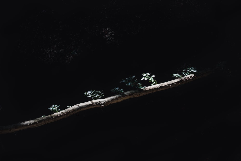 aerial view of green trees and white boat on sea during daytime