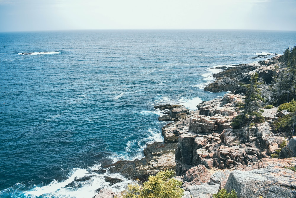 gray rocky shore with green plants and blue sea water during daytime