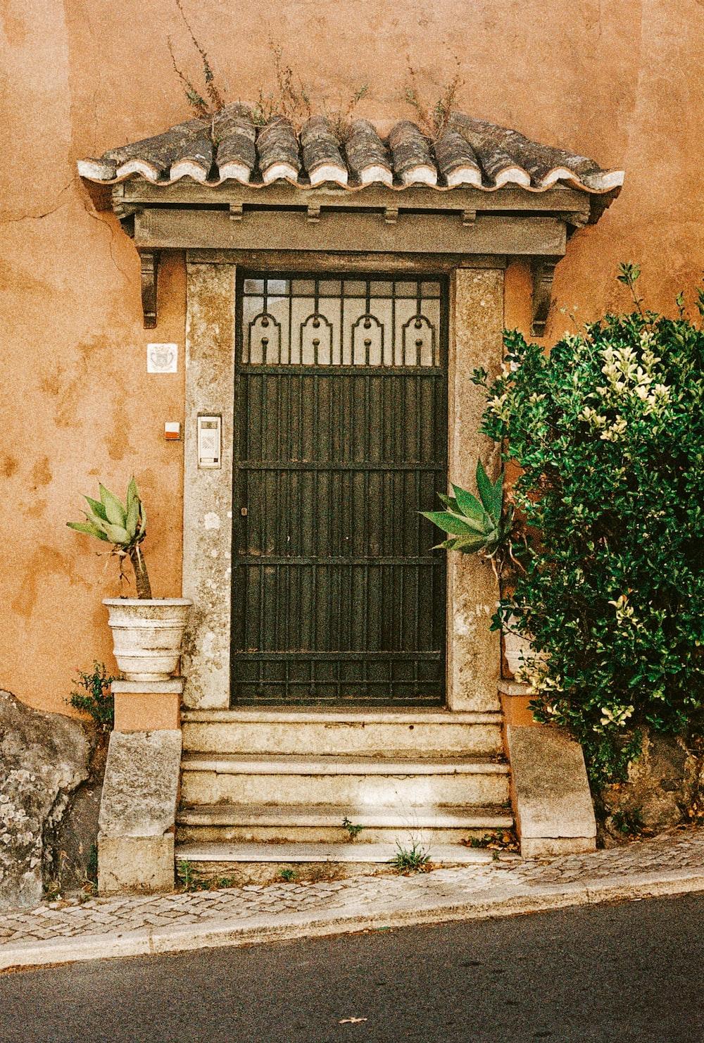 black wooden door with green plant