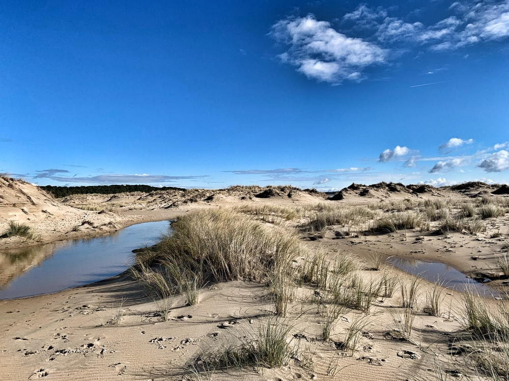 brown grass on brown sand near body of water under blue sky during daytime