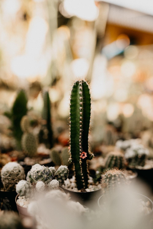 green cactus in tilt shift lens