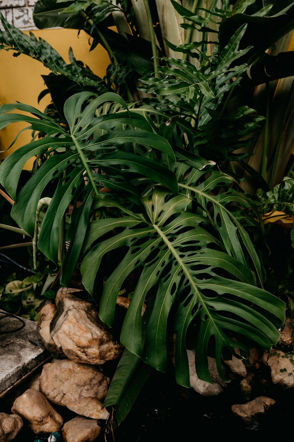 green plant beside yellow wall