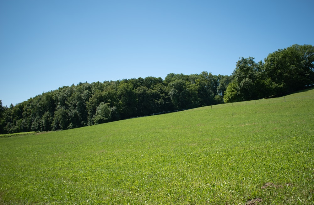 green grass field with trees under blue sky during daytime