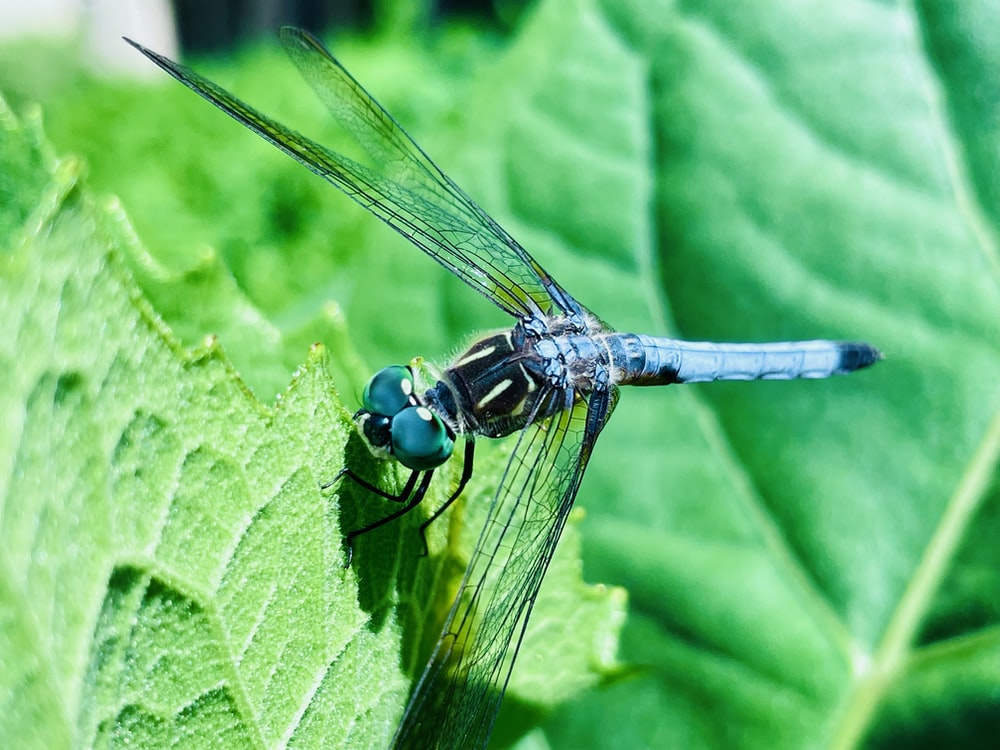 black and yellow dragonfly on green leaf