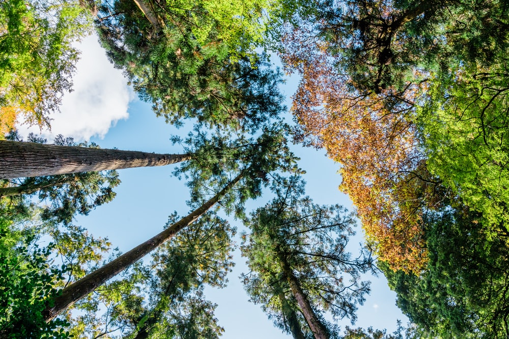 yellow and green leaf trees under blue sky during daytime