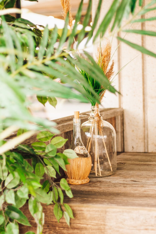 green plant in clear glass bottle