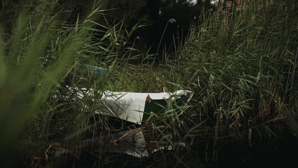 white textile on green grass