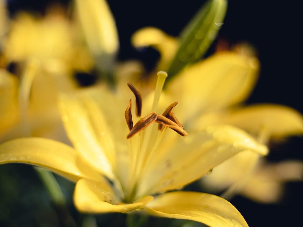yellow flower in macro lens