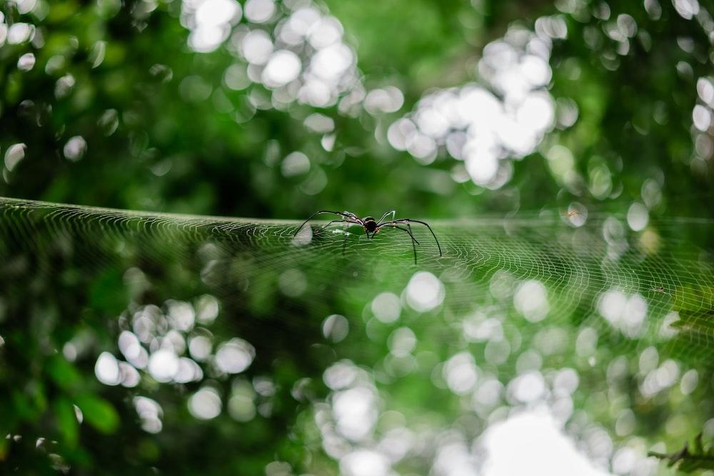 water droplets on spider web in tilt shift lens