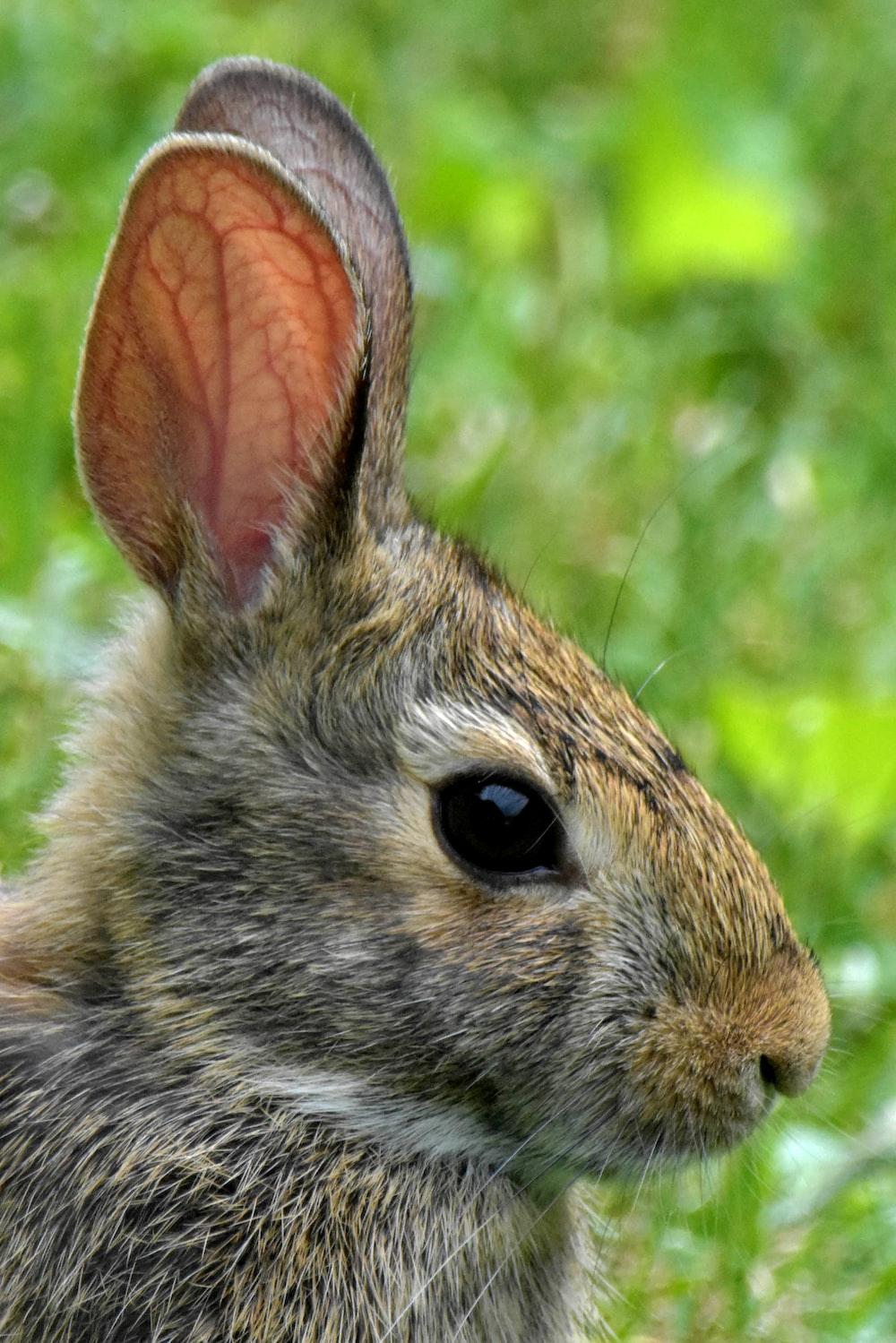 brown rabbit on green grass during daytime