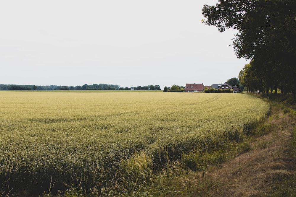 green grass field near green trees during daytime