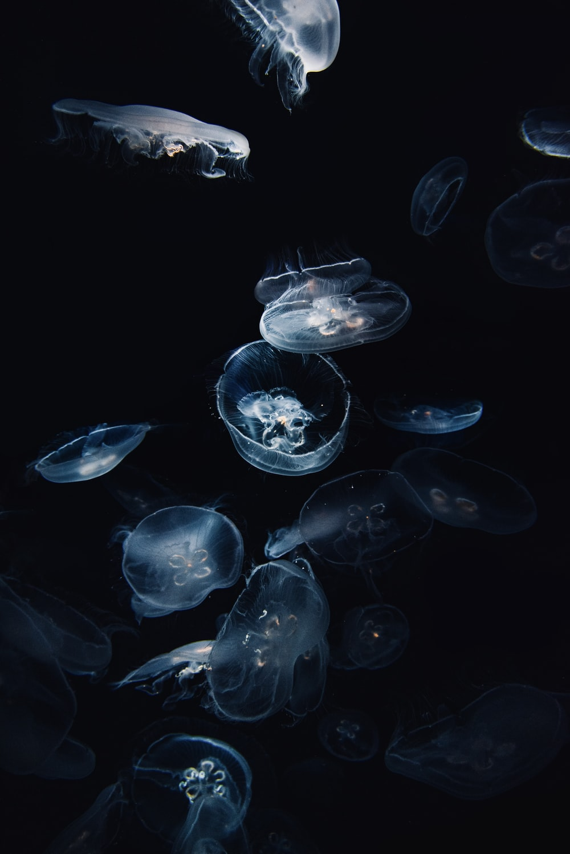 blue and white jellyfish illustration