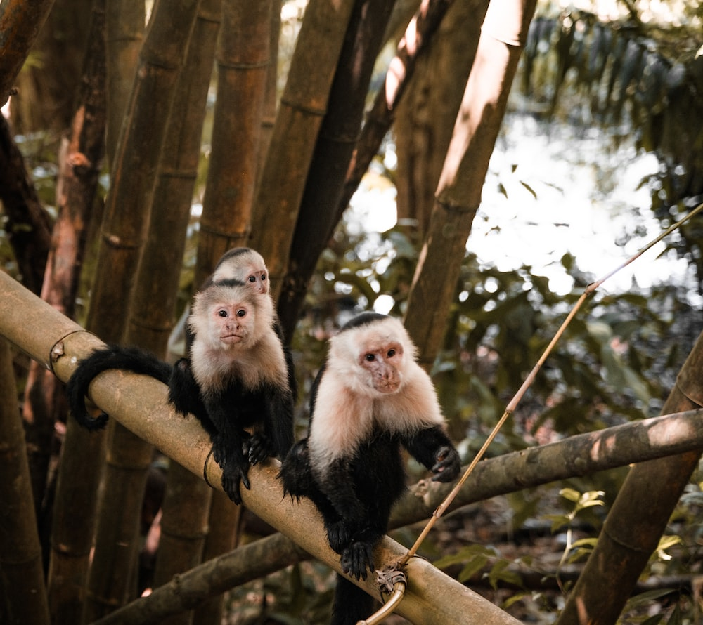 white and black monkey on brown tree branch during daytime