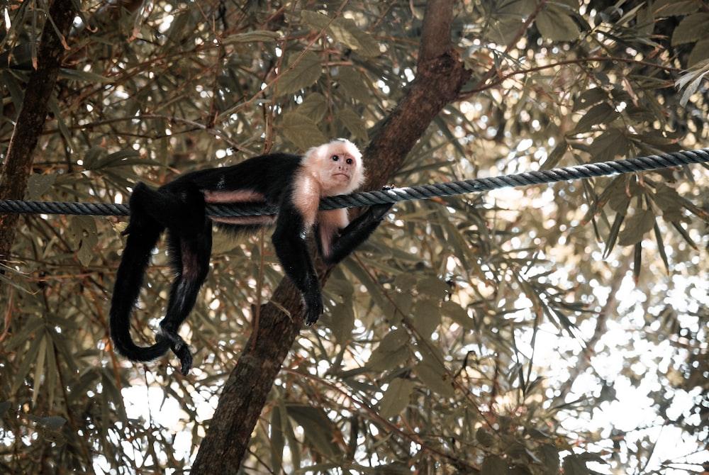 black monkey on brown tree branch during daytime
