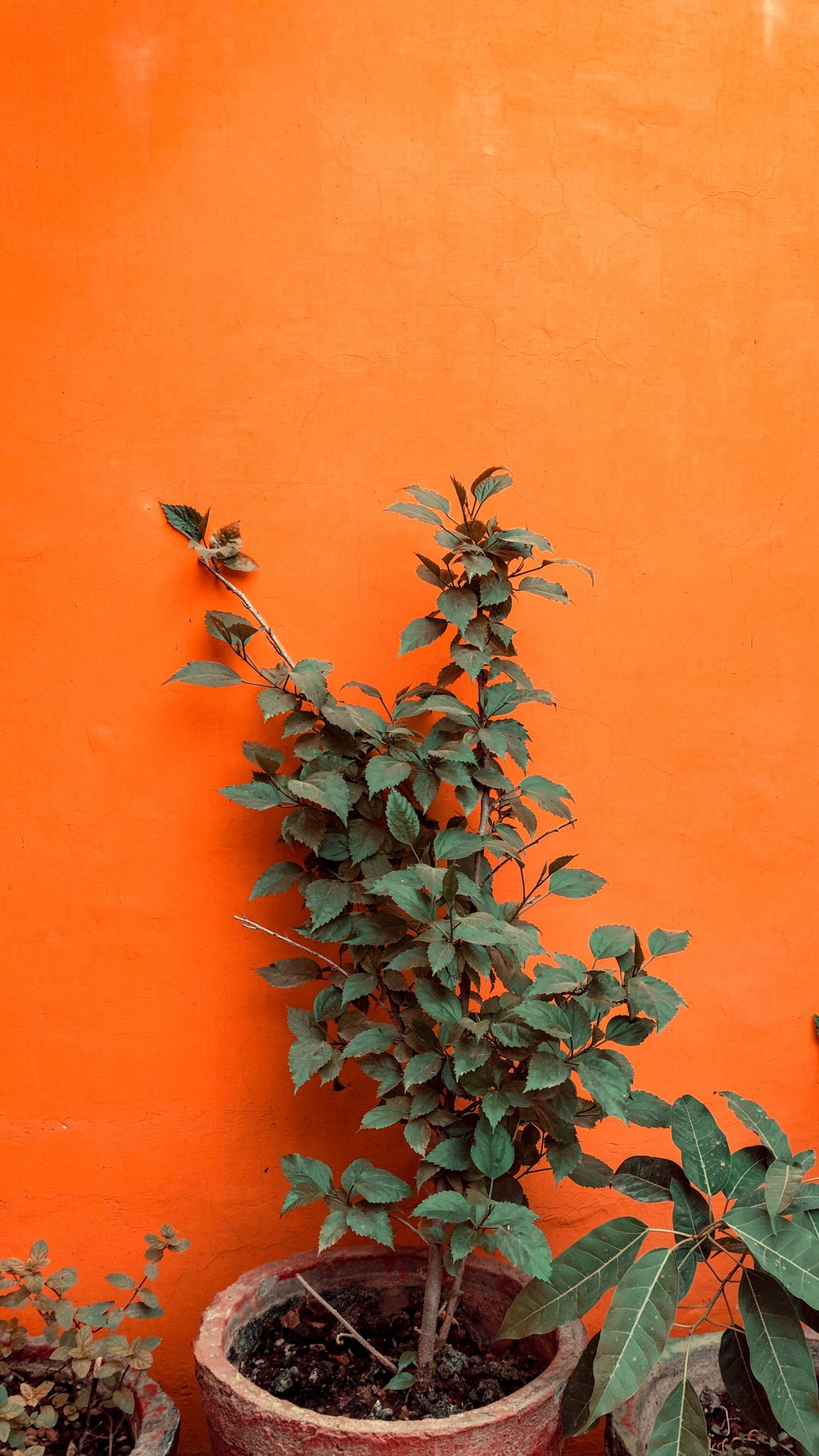green and white plant on orange wall