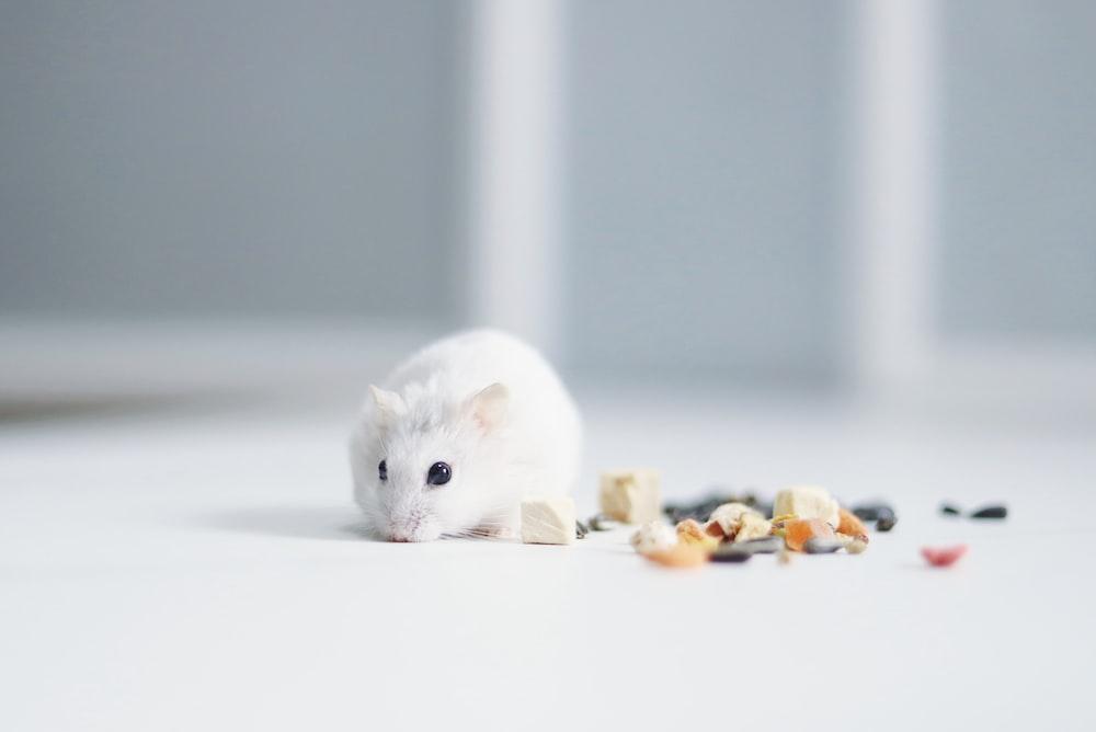 white mouse on white table