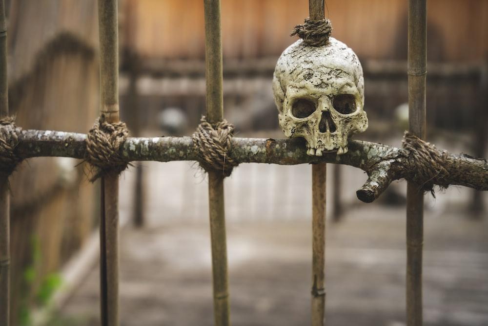 white skull on brown metal fence