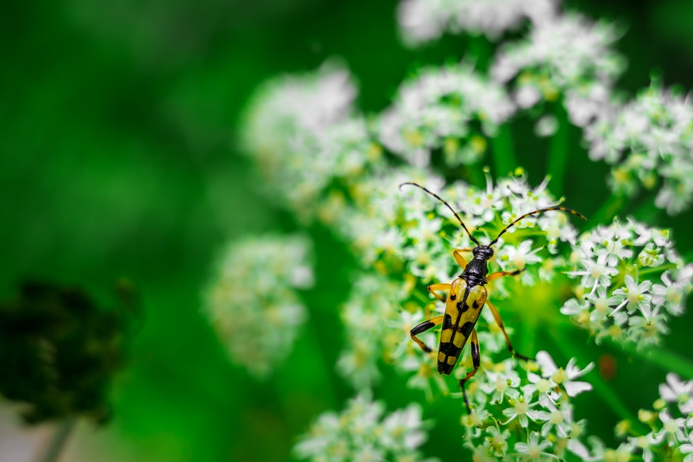 yellow and black insect on green plant