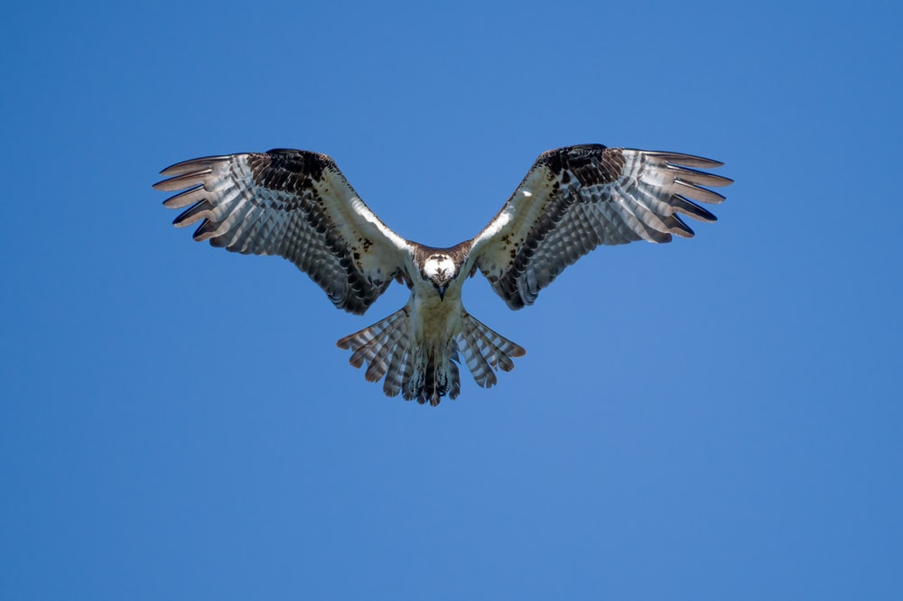 brown and white owl flying under blue sky during daytime