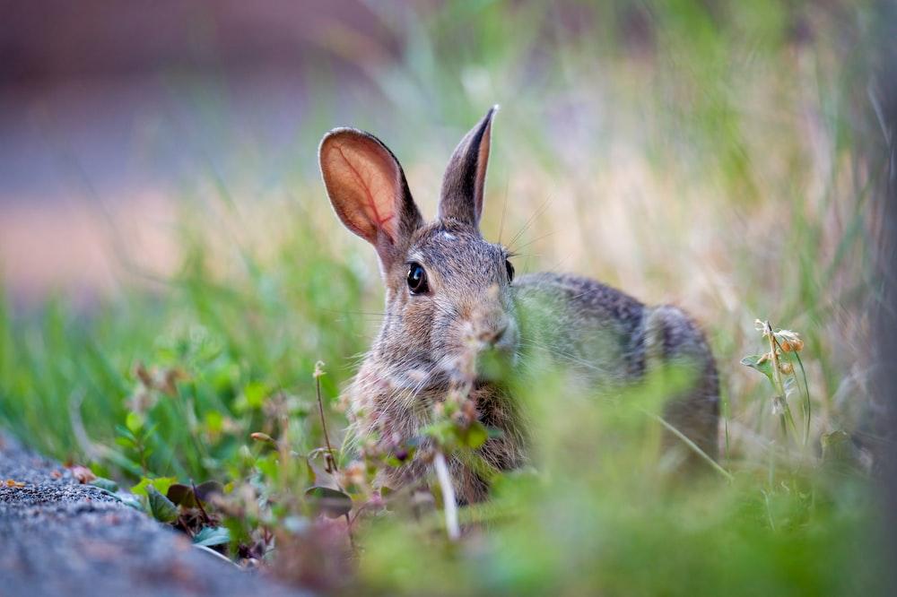 gray rabbit on green grass during daytime
