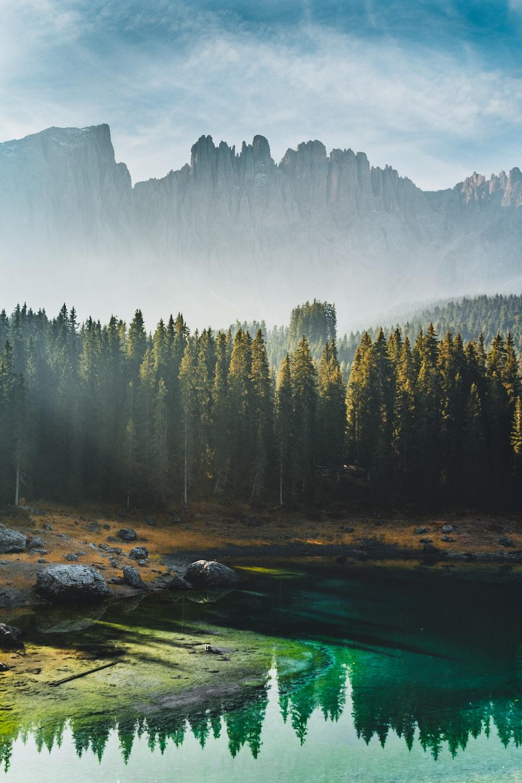 green pine trees near lake during daytime