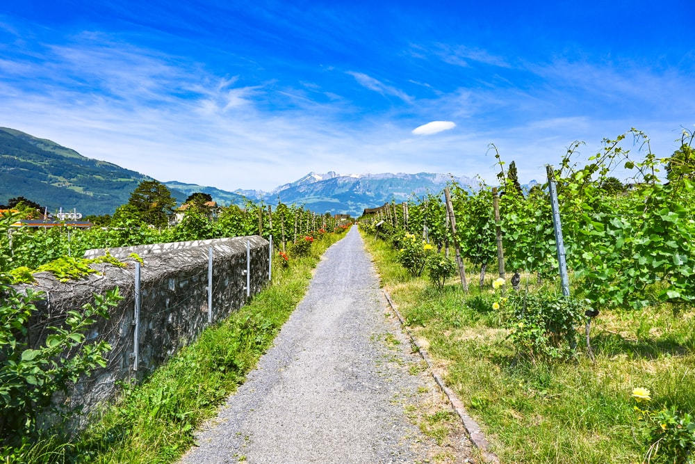 gray pathway between green grass field under blue sky during daytime