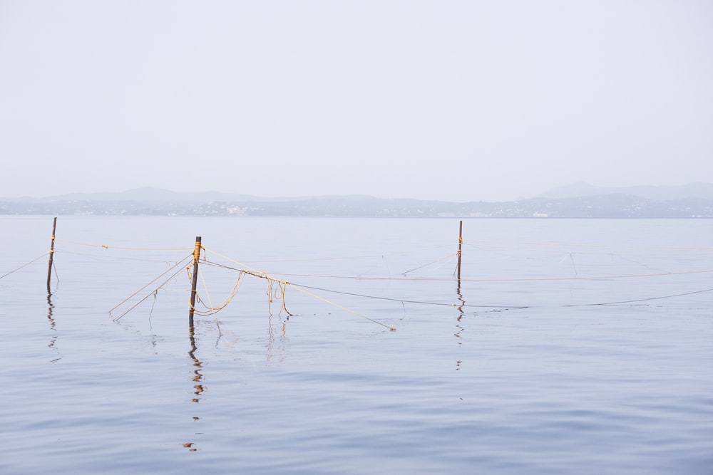 brown wooden stick on body of water during daytime