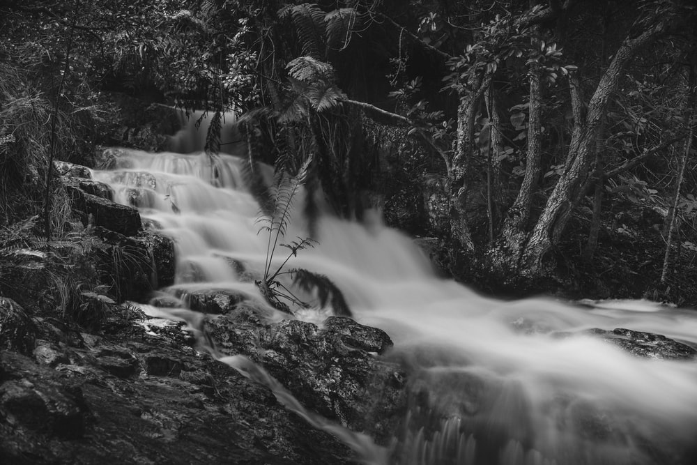 grayscale photo of river in forest