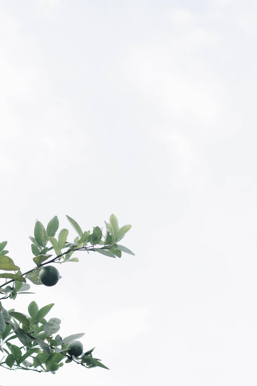 green leaves under white sky during daytime