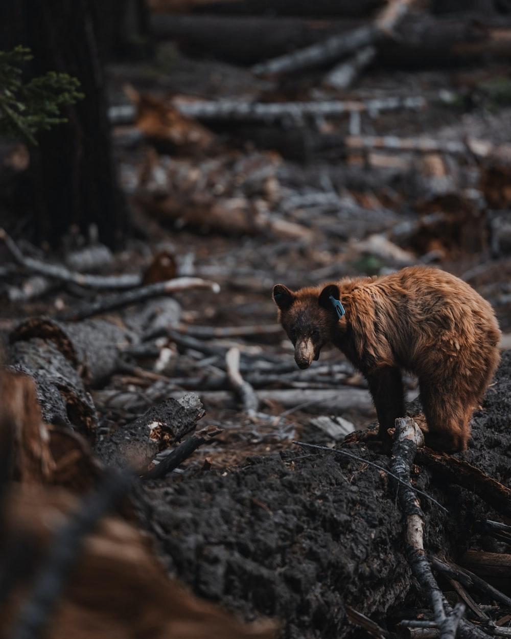 brown bear on brown tree log during daytime