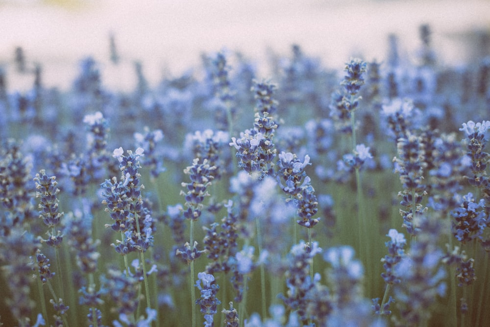 blue flowers on brown field during daytime