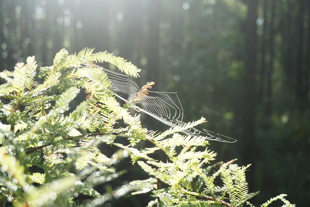 spider on green leaf plant during daytime