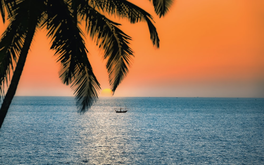 silhouette of palm tree on sea during sunset
