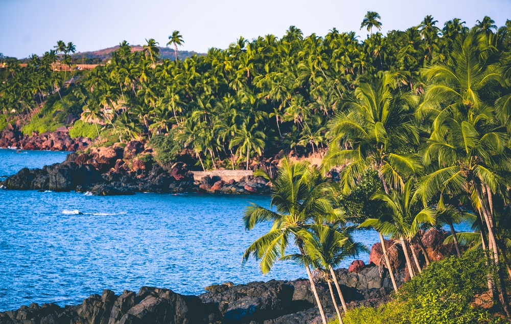 green palm trees near blue sea under blue sky during daytime