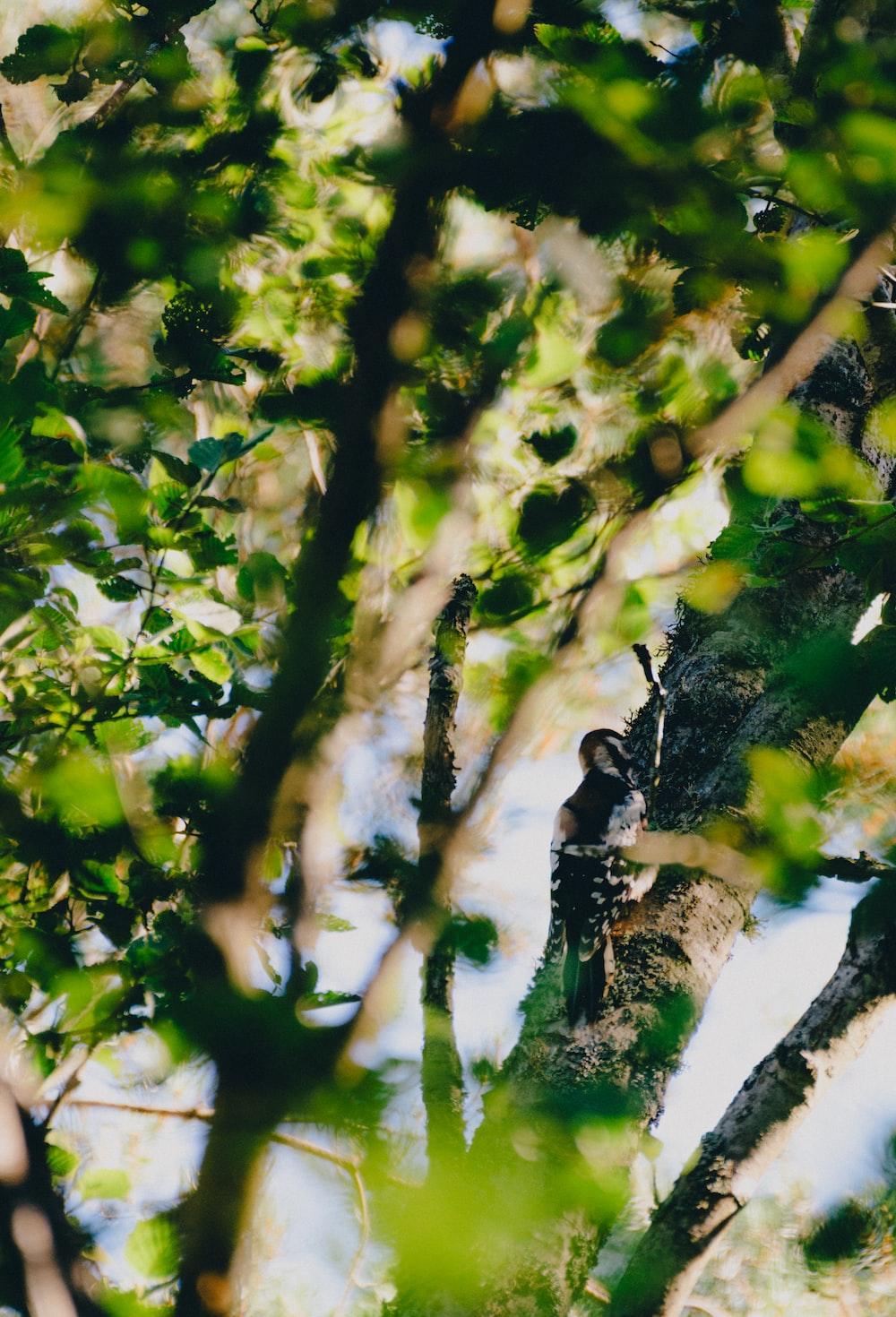black bird on tree branch during daytime