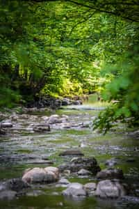 As Softly As The Stream Does Flow............... stream stories
