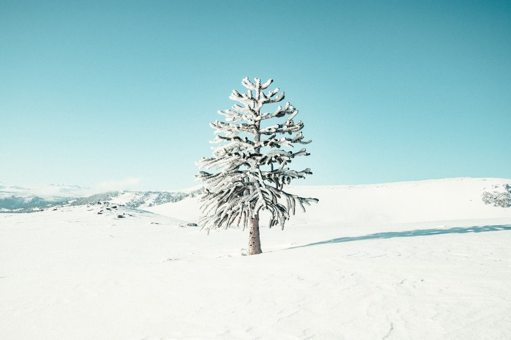 snow covered tree on snow covered ground under blue sky during daytime