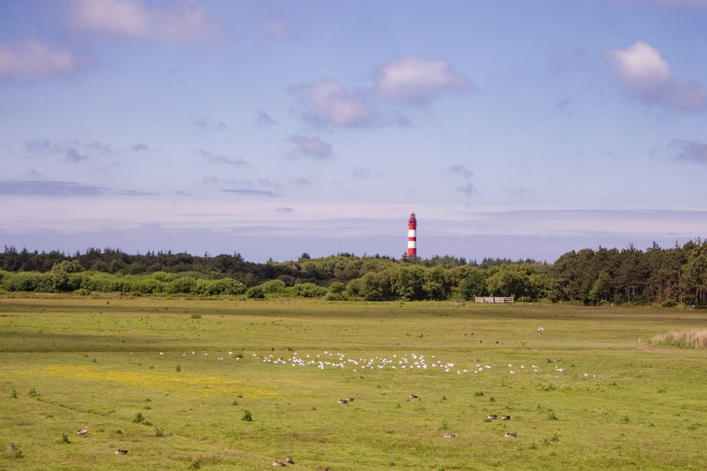 red and white lighthouse on green grass field under white clouds during daytime