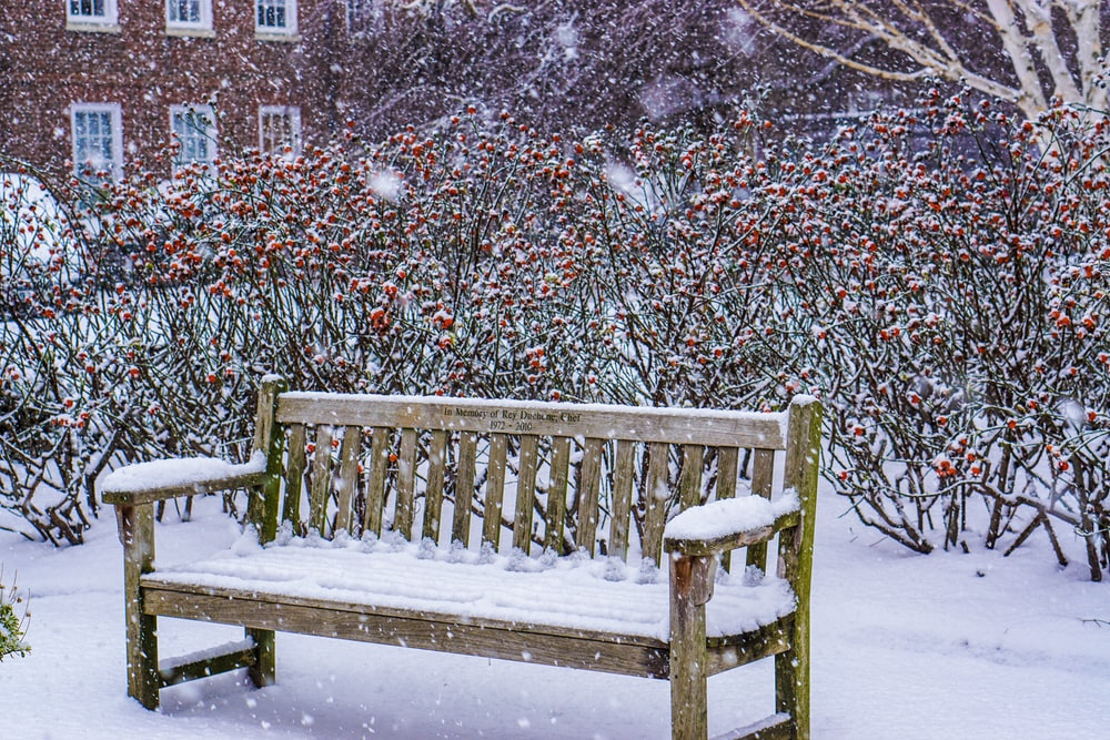 brown wooden bench covered with snow