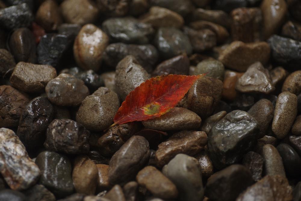 red leaf on black stones