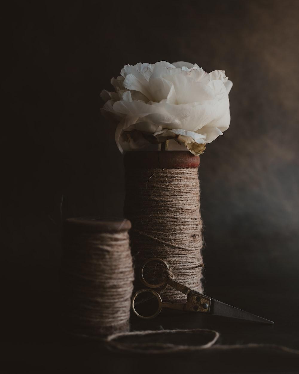 white rose on brown thread