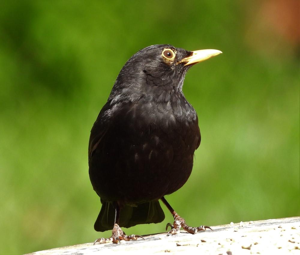 black bird on white tree branch during daytime