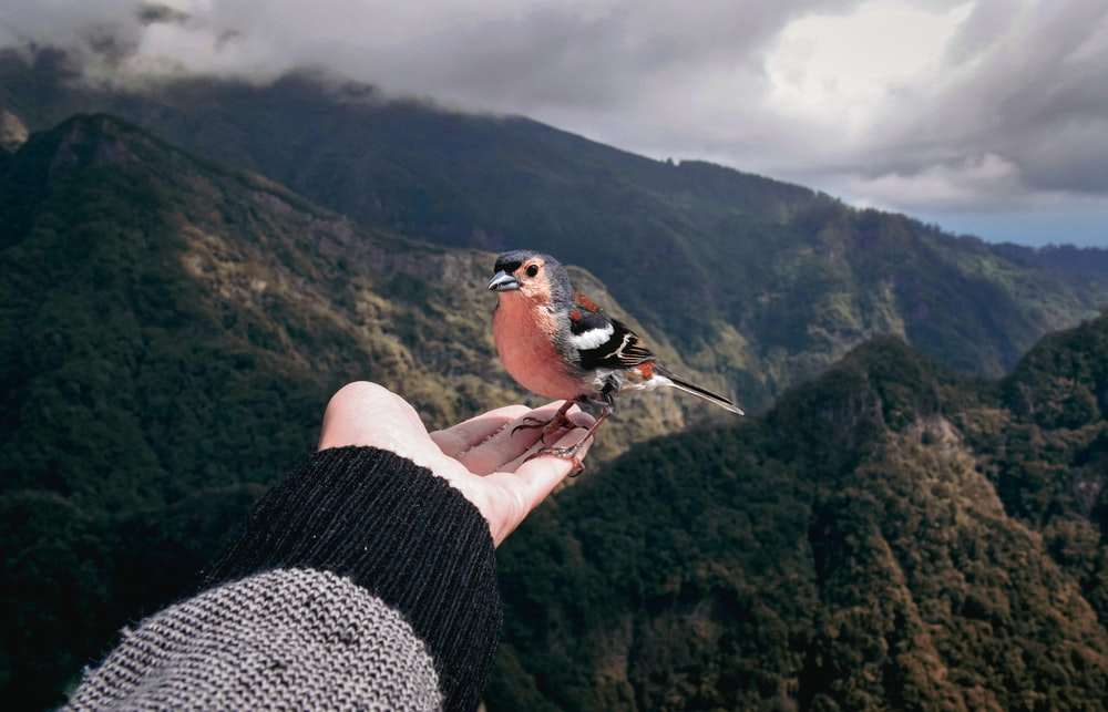 brown and white bird on persons hand