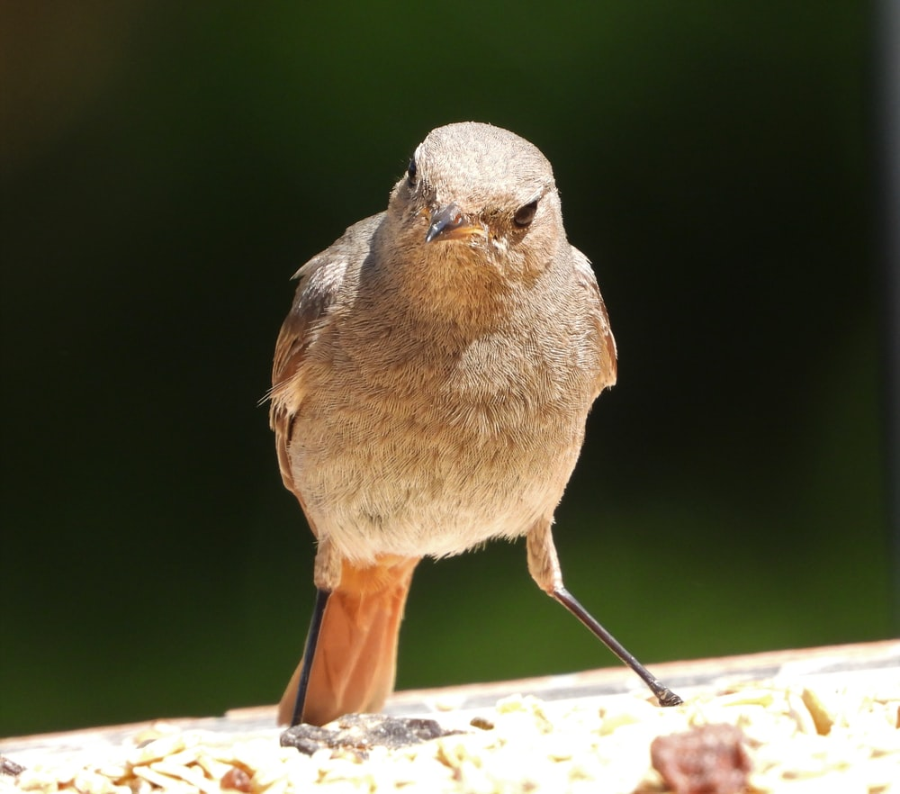 brown and gray bird on brown wooden table
