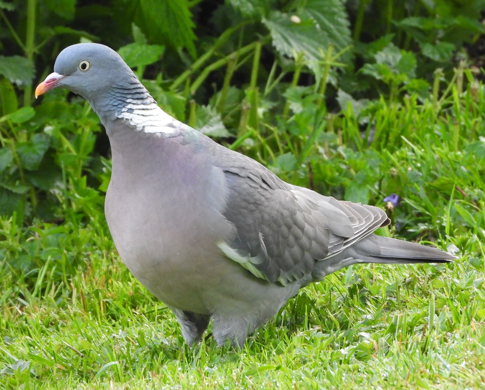 gray and white bird on green grass during daytime