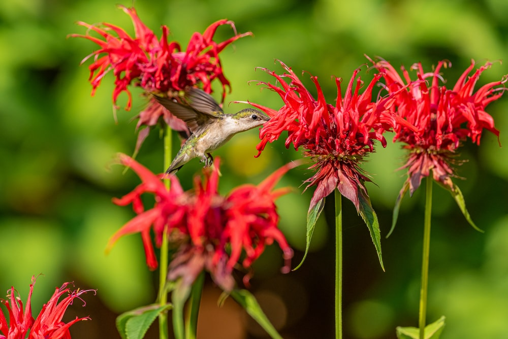 gray and white bird on red flower