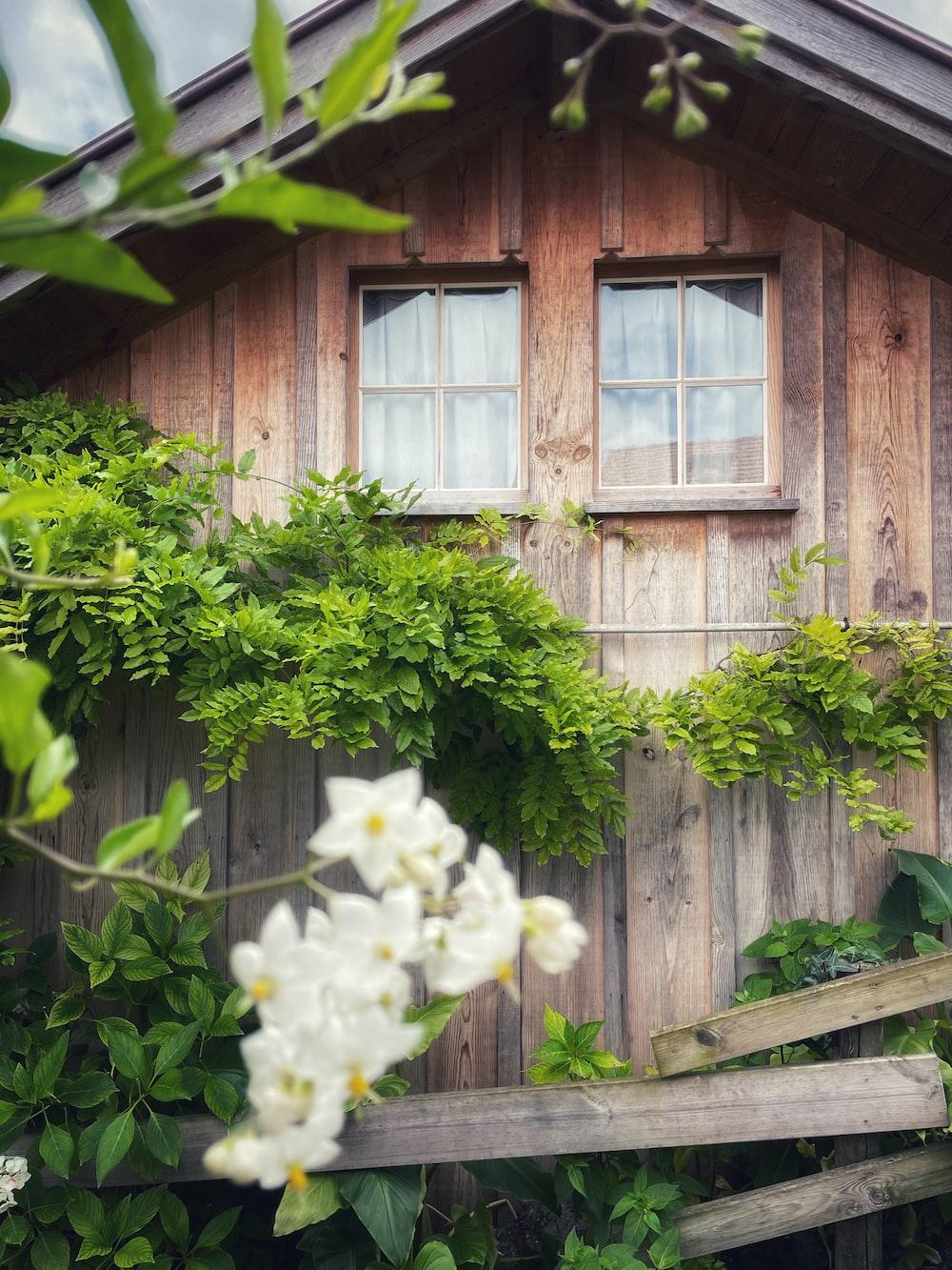 white flower near brown wooden fence