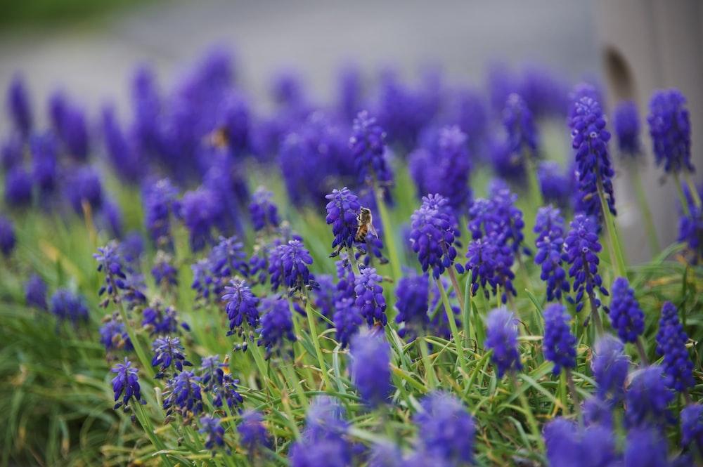 purple flower in green grass field during daytime