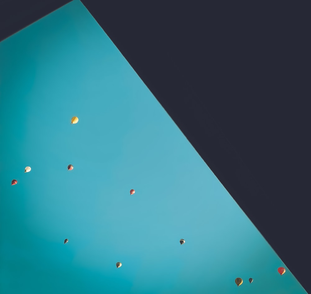 blue and black birds flying during daytime